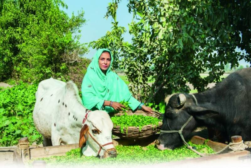 USAID marks completion of Punjab enabling environment project