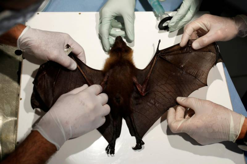 WHO says coronavirus likely transmitted from bats to humans
