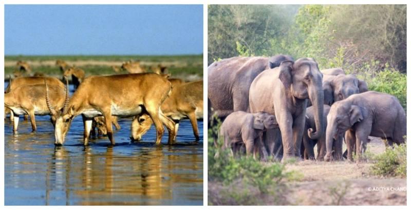 Lightning kills 350 rare antelopes in Kazakhstan, 18 elephants in India
