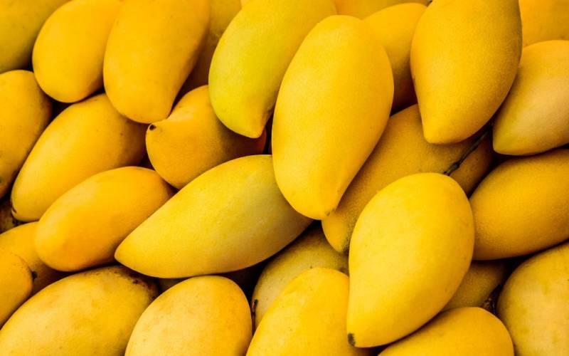 Good news for diabetics: Pakistani expert 'introduces sugar-free mangoes'