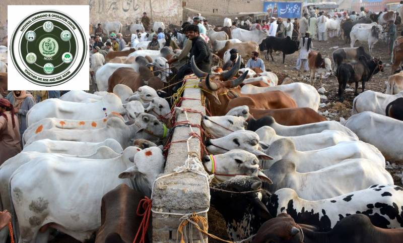 NCOC makes Covid vaccination mandatory for staff, traders at Eidul Azha cattle markets