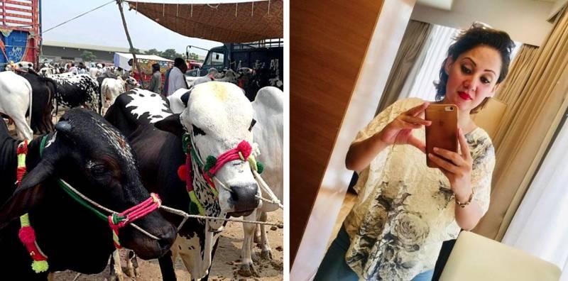 Twitter reacts to Gharidah Farooqi's remarks about animal sacrifice on Eidul al-Adha