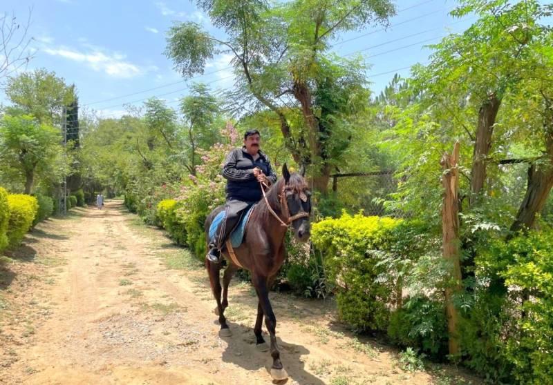 Pakistani Ertugrul! Interior Minister Sheikh Rashid's horse ride video goes viral