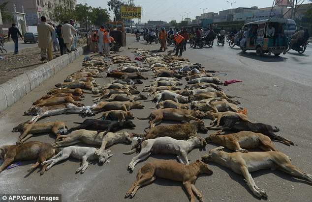 A picture taken during last year's culling campaign in Karachi