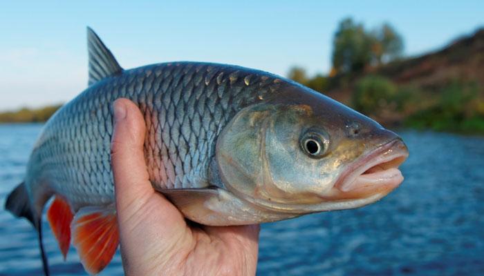 357551-fish